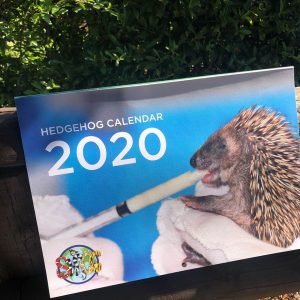 Hedgehog Calendar 2020